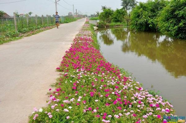 Con đường hoa khoe sắc rực rỡ ở làng quê Nam Định5