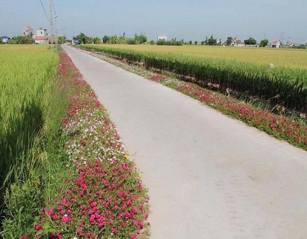 Con đường hoa khoe sắc rực rỡ ở làng quê Nam Định