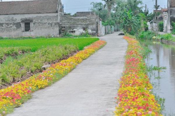Con đường hoa khoe sắc rực rỡ ở làng quê Nam Định11