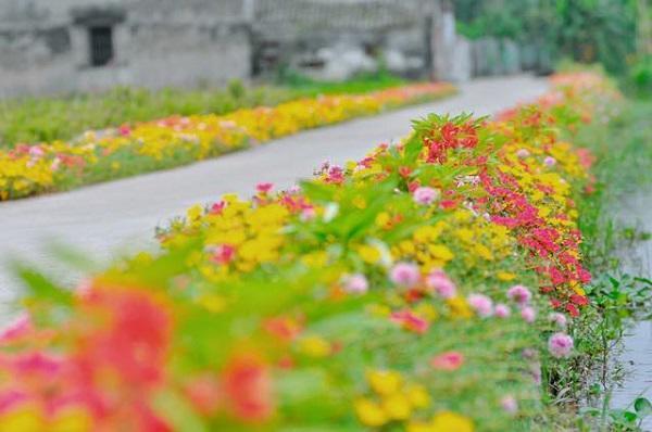 Con đường hoa khoe sắc rực rỡ ở làng quê Nam Định8