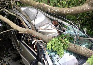 Cây xanh đè bẹp dúm ô tô 7 chỗ trong mưa gió, tài xế thoát chết trong gang tấc