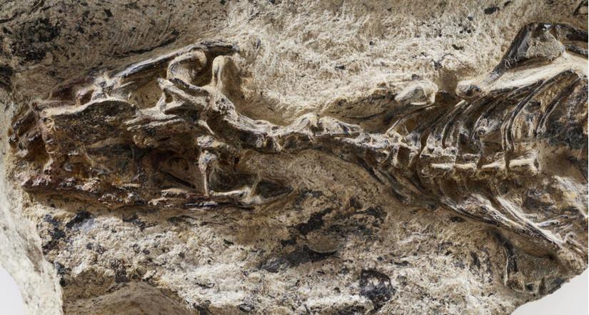 Bất ngờ phát hiện hóa thạch động vật có niên đại 42 triệu năm