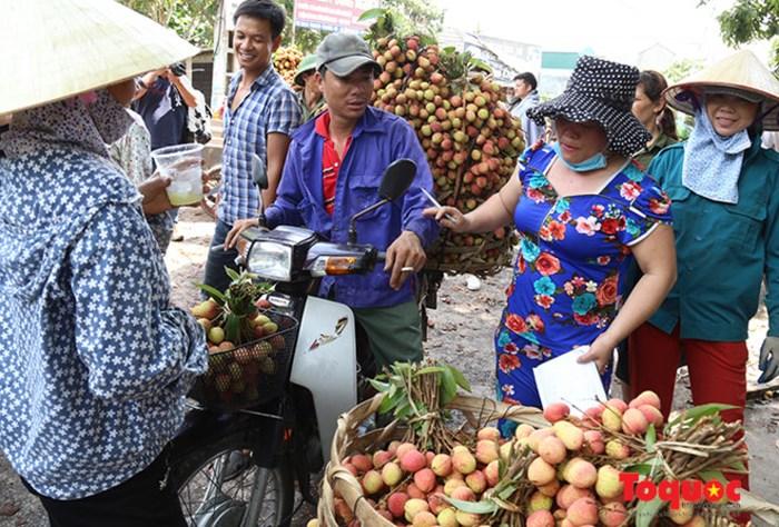 Không có chuyện vải thiều mất giá tại Bắc Giang và Hải Dương