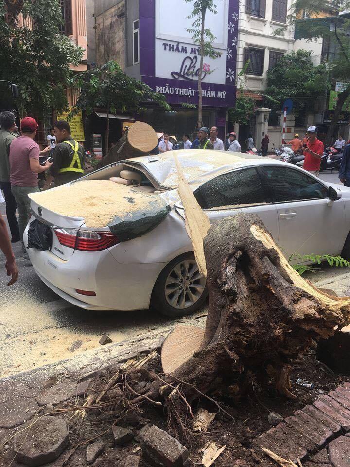 Hà Nội: Xế sang hư hỏng sau khi bị cây xanh đổ đè trúng8