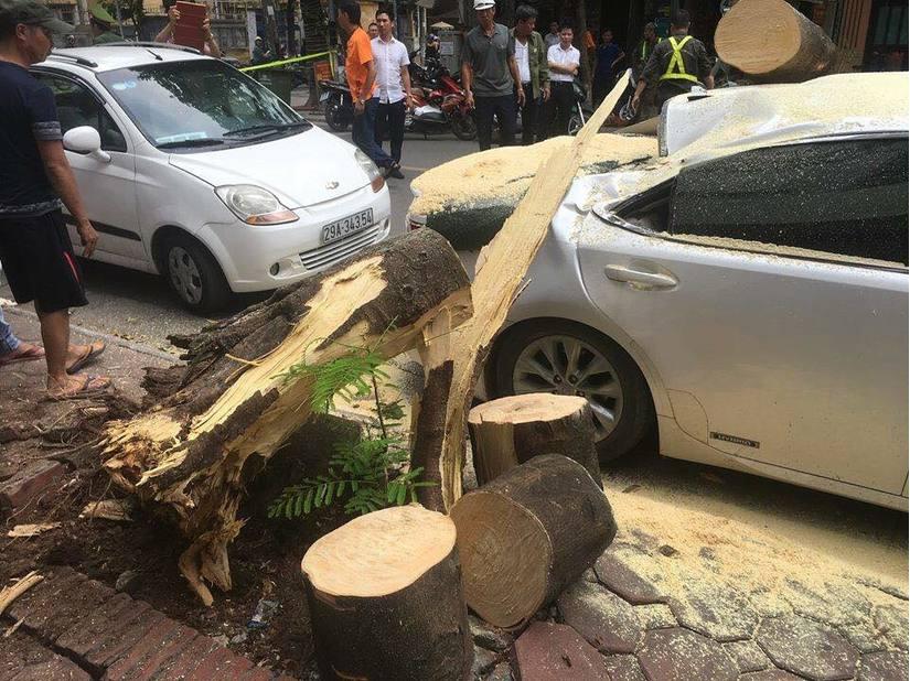 Hà Nội: Xế sang hư hỏng sau khi bị cây xanh đổ đè trúng7