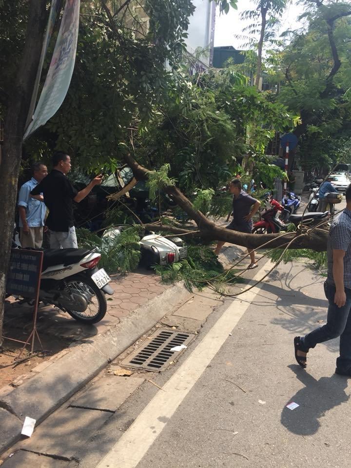 Hà Nội: Xế sang hư hỏng sau khi bị cây xanh đổ đè trúng5