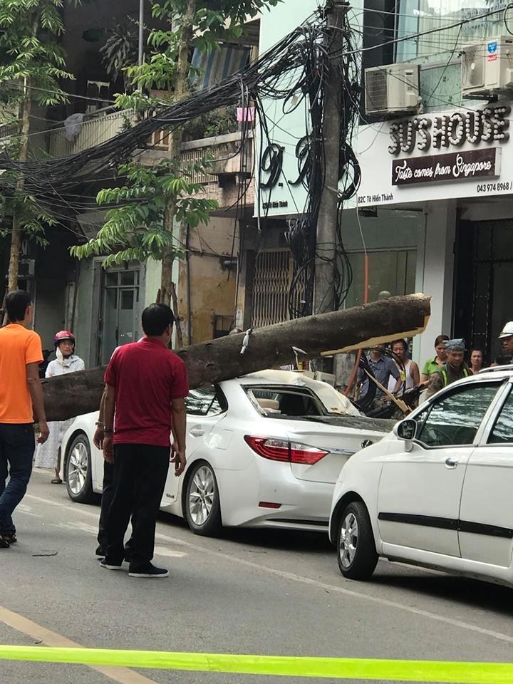 Hà Nội: Xế sang hư hỏng sau khi bị cây xanh đổ đè trúng