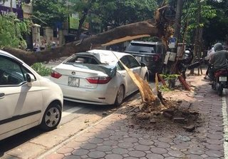 Hà Nội: Xế sang hư hỏng nặng sau khi bị cây xanh đổ đè trúng
