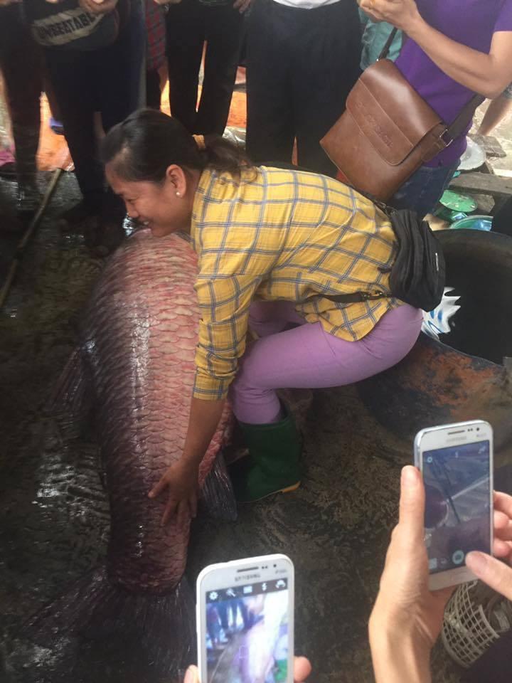 Ngư dân bắt được cá trắm đen khủng, nặng 71kg ở hồ Thác Bà4