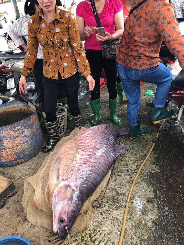 Ngư dân bắt được cá trắm đen khủng, nặng 71kg ở hồ Thác Bà6