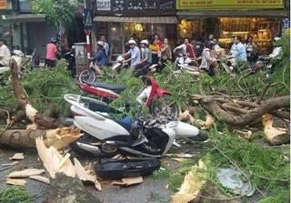 Hà Nội: Cây phượng đổ lúc tan tầm đè lên nhiều người đi đường
