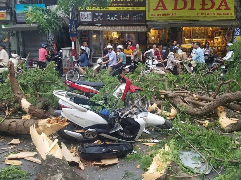 Cây phượng đổ lúc tan tầm, nhiều phụ nữ và trẻ em bị thương3