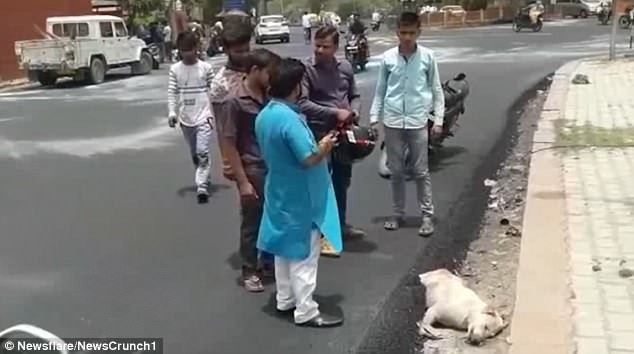 Nhóm công nhân thản nhiên rải nhựa đường lên một chú chó đang nằm ngủ
