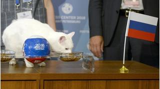 Những 'nhà tiên tri' động vật chuyên dự đoán đúng kết quả World Cup
