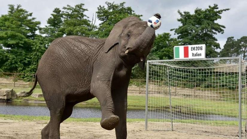 Những nhà tiên tri động vật chuyên dự đoán đúng kết quả World Cup
