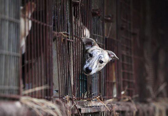 Việc giết chó ăn thịt chính thức là hành động bất hợp pháp