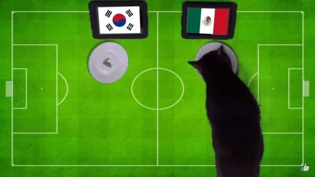đại bàng, vẹt và mèo đồng lòng dự đoán kết quả trận Mexico Hàn Quốc