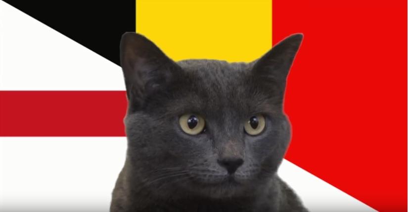 Mèo tiên tri dự đoán bất ngờ về trận đấu giữa Anh và Bỉ