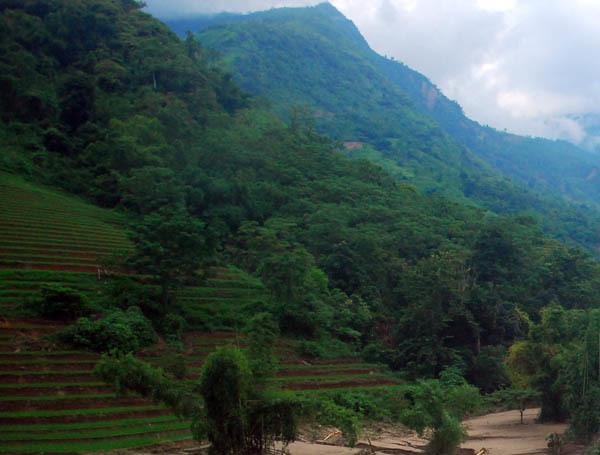 Lào Cai: Đi chăn trâu, một thiếu nữ bị lũ cuốn trôi