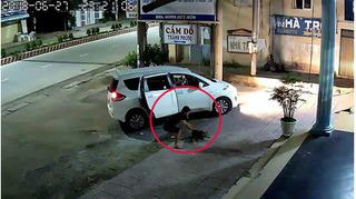 Clip 'cẩu tặc' đi ô tô, dùng súng điện trộm chó trong tích tắc