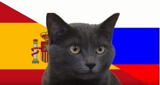 Mèo tiên tri dự đoán bất ngờ về trận đấu giữa Anh và Colombia