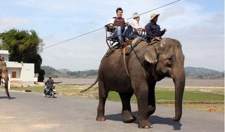 Du khách sẽ không được cưỡi voi ở Vườn Quốc gia Yok Đôn