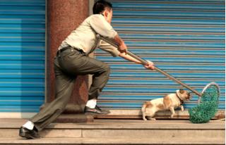 Thanh niên bị mắc bệnh dại khi câu trộm chó, cả gia đình kéo đến đòi bồi thường