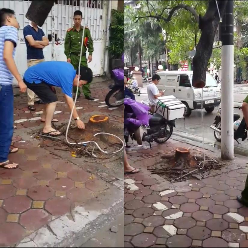 Tá hỏa cây sưa đỏ hơn 20 năm tuổi bị cưa trong đêm ở Thủ đô