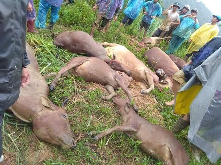 Hòa Bình: Sạt lở núi vùi lấp lán trại, 1 người tử vong 11 con bò bị vùi lấp
