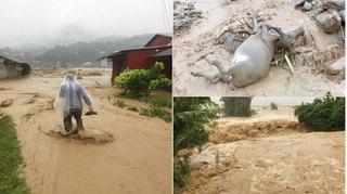Yên Bái: 30 người chết, mất tích và bị thương, thiệt hại hàng trăm tỷ đồng do bão số 3