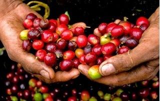 Giá cà phê hôm nay 29/7: Vẫn ảm đạm, chưa có dấu hiệu phục hồi