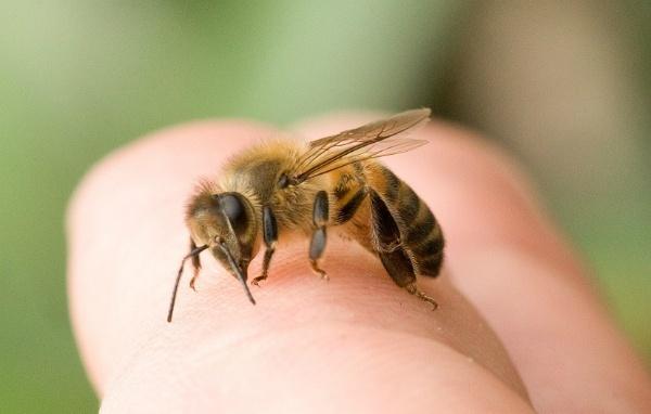 Bài học cảnh tỉnh mọi cha mẹ từ vụ bé gái tử vong do ong đốt