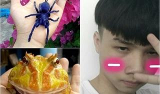 Rùng mình với bộ sưu tập toàn nhện độc, bò cạp, rắn lục... của 10X Khánh Hòa