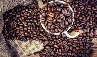 Giá cà phê hôm nay 6/9: Trong nước trầm lắng, thế giới tăng nhẹ