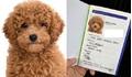 Chàng trai gây 'bão' khi đưa chó đi chụp anh thẻ, làm giấy khai sinh