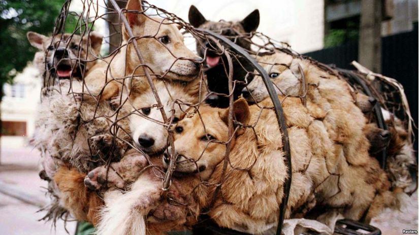 thịt chó tiềm ẩn nhiều hiểm họa cho sức khỏe, thịt chó