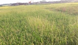 Việt Yên, Bắc Giang: Dấu hiệu vi phạm Luật Đất đai tại dự án Khu B KĐT Đình Trám - Sen Hồ