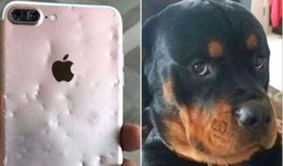 Chó cưng gặm nát iPhone 8 Plus, chủ đăng đàn hỏi nấu món gì cho nhanh chín