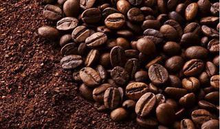 Giá cà phê hôm nay 18/9: Điệp khúc 'tiếp tục giảm' vẫn chưa kết thúc