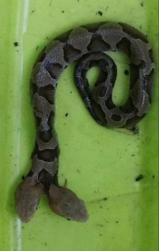 Hoảng hồn phát hiện rắn hai đầu trong vườn hoa