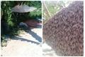 Chọc tổ ong khoái, người đàn ông bị đốt tử vong tại chỗ