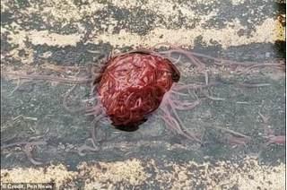 Hàng nghìn con giun cuộn tròn như quả bóng khiến nhiều người khiếp sợ