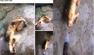 Thêm một nam thanh niên ở Hà Tĩnh khoe ảnh giết khỉ trên Facebook gây bức xúc