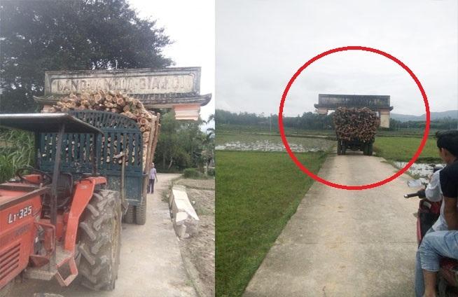 Xôn xao hình ảnh xe công nông chở cây cõng cổng làng di chuyển trên đường2