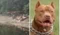 Hà Nội: Đang tập thể dục, người đàn ông bị chó Pitbull cắn nhập viện
