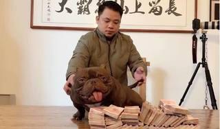 Thanh niên ở Biên Hòa chi 2,6 tỷ đồng để mua một chú chó yêu thích
