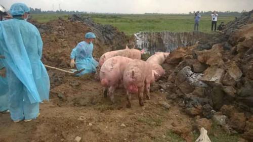 Hà Tĩnh: Truy đuổi bắt xe tải chở 12 tấn lở mồm long móng