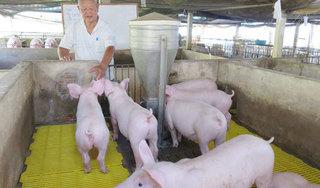 Giá heo (lợn) hơi hôm nay 28/12: Giảm 4.000 đồng/kg ở miền Trung