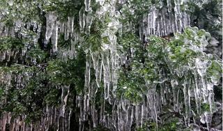 Clip: Lạnh cực độ, cây cỏ trên đỉnh Mẫu Sơn chìm trong băng giá
