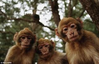 Bị kết án tù vì quấy rối tình dục một con khỉ